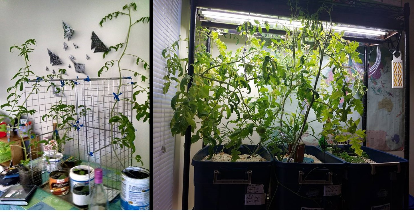 indoor growing system