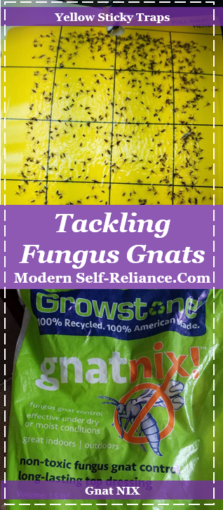 fighting fungus gnats
