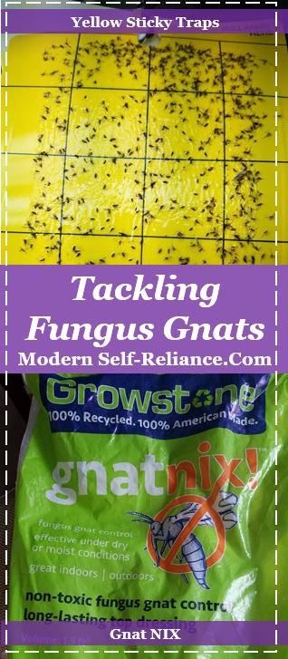 fighting fungus gnats
