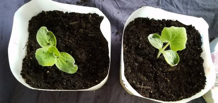 3 Things to Consider when Starting Seeds Inside