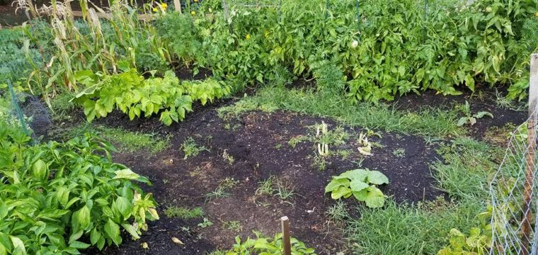 10 Lessons Learned from Last Year's Garden 2016