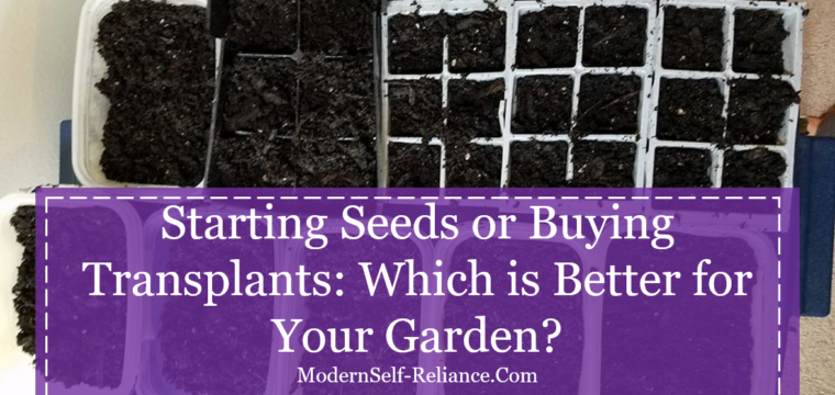 Starting Seeds or Buying Transplants: Which is Better for Your Garden?