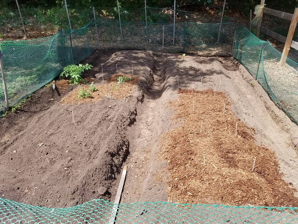 Added mulch to help reduce weeds and hold soil moisture.