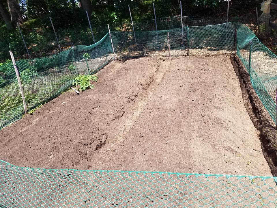 garden ready for plants