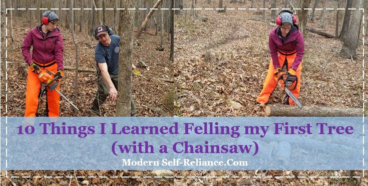 10 Things I Learned Felling my First Tree (with a Chainsaw)