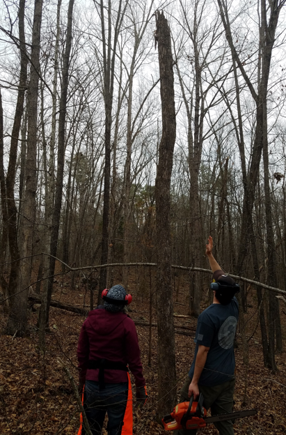 Learning to Fell Trees