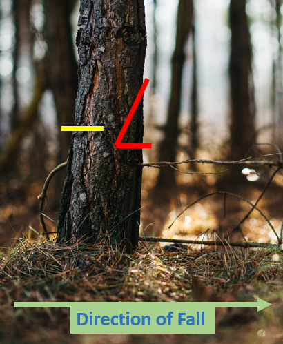 tree notch diagram for tree felling