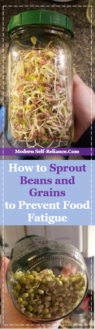 How to Sprout Beans and Grains to Prevent Food Fatigue | Modern Self-Reliance