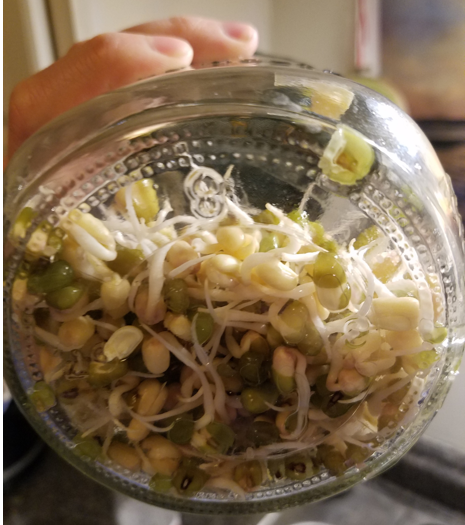 Day 3 Bean Sprouts