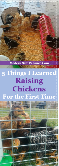 5 Things I Learned Raising Chickens For the First Time